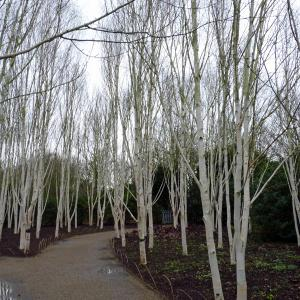Anglesey Abbey 1 cw